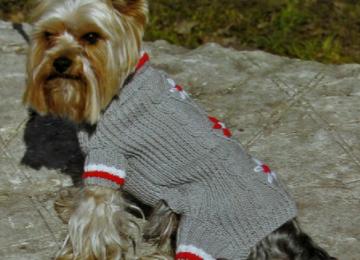 Тонкости вязания одежды и обуви для собак
