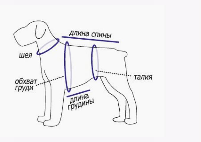 обежда для собак 1